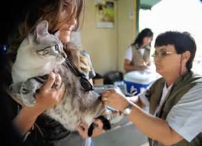 Vacinando cães e gatos de Bálsamo