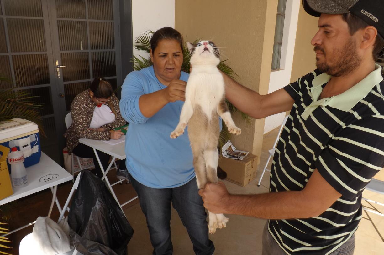 """""""Dia D"""" para vacinar cães e gatos"""