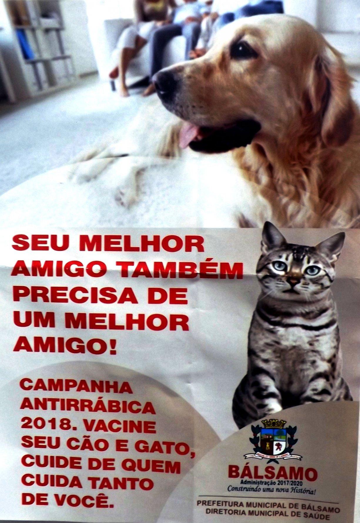 Agosto começa vacinando cães e gatos de Bálsamo